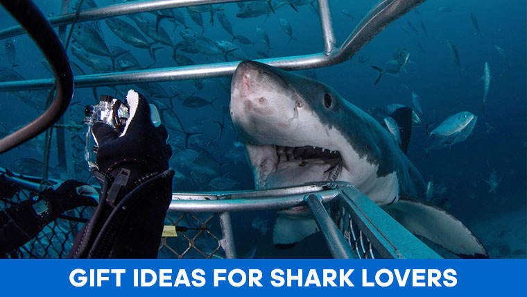 shark-lover-gifts